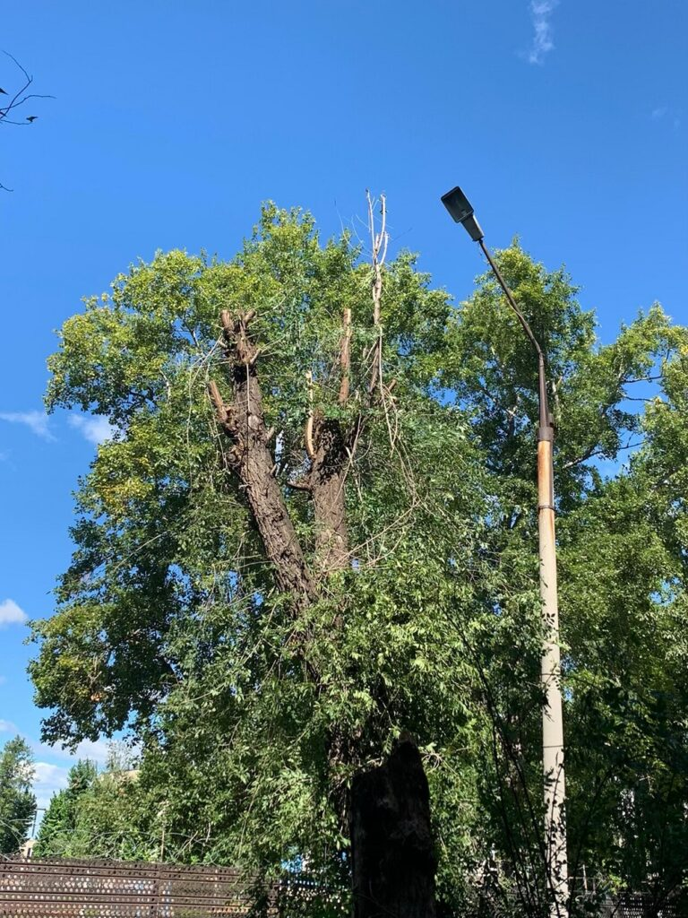 Опил аварийных деревьев
